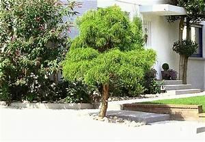 immergrune baume fur den garten immergr ne b ume f r den With französischer balkon mit schnellwachsende immergrüne bäume für den garten