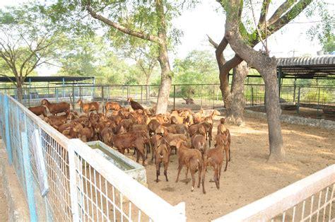 goat farm design