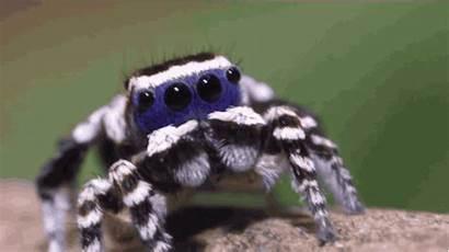 Spiders Spider Pretty Bad Vox