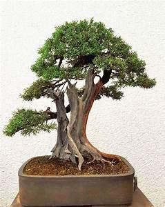 Bonsai Arten Für Anfänger : interview mit 7 bonsai experten ber 30 tipps f r anf nger ~ Sanjose-hotels-ca.com Haus und Dekorationen