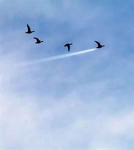 Photo Un Oiseau Raction Vainqueur De La Catgorie