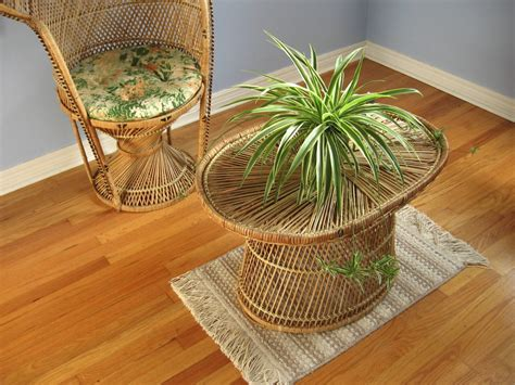 common houseplants     care   zing