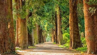 Forest Walkway Desktop 4k 1080 1920 Wallpapers