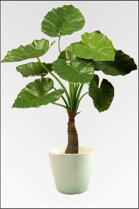 Große Zimmerpflanzen Günstig by Wir Bieten Ihnen Eine Gro 223 E Auswahl An K 252 Nstlichen