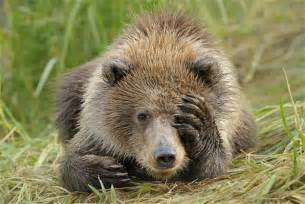 Cute Grizzly Bear