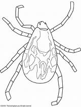 Tick Coloring Colouring Rodent Embroidery Lightupyourbrain sketch template