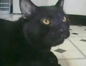 sylvester the talking cat the secret to avoiding hairballs don t so fast catster