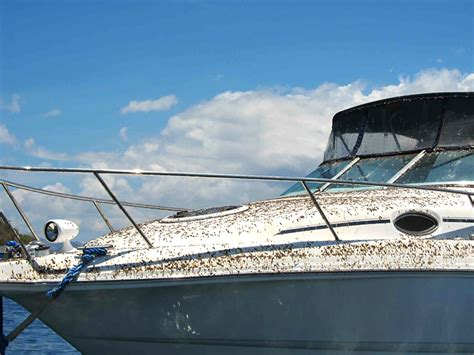 Keep Spiders Out Of Boat keep pests your boat big boaters of ontario