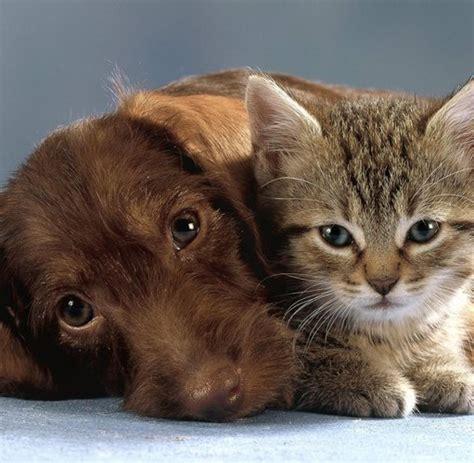 Krankenversicherung Für Katze