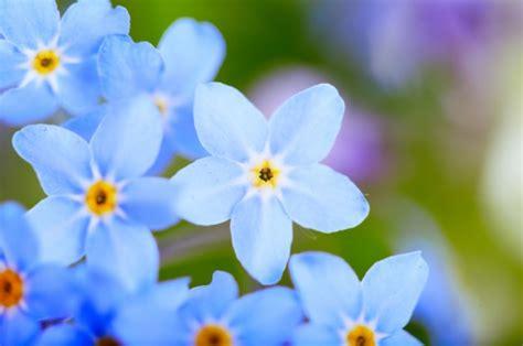 bingung mengutarakan isi hati katakan  bunga