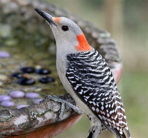tallahassee nurseries bird talk