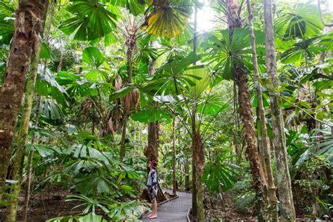 visit  daintree rainforest