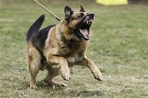 the dog trainer managing 5 key types of dog aggression With aggressive dog behavior