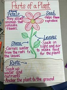 13 Creative Ways To Teach Plant Life Cycle