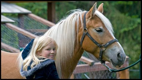 horse beginner breed whats horses breeds pony match