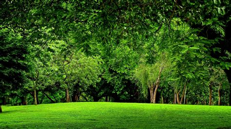 Free Green Forest Background by Green Forest Background 183 Wallpapertag
