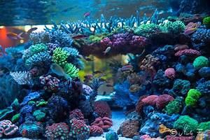 Süßwasserfische Fürs Aquarium : die besten 17 ideen zu aquarium becken auf pinterest ~ Lizthompson.info Haus und Dekorationen
