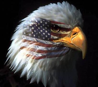 Eagle Usa Wallpapers Whistleblowing Airline Militia Tactical