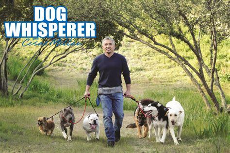 doog cesar millan pro belt  dog whisperer walkie belt
