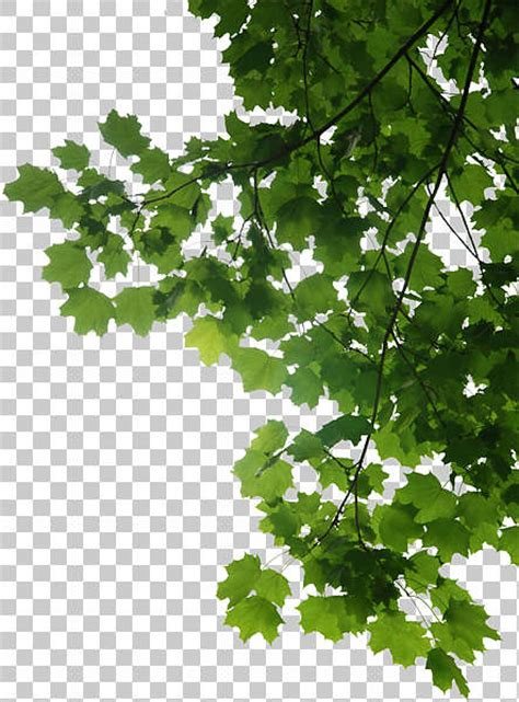 trees  background texture leaves alpha masked