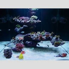 """Aquascape With Fijireefrockcom A 75 Gal Tank 48"""" L X 18"""