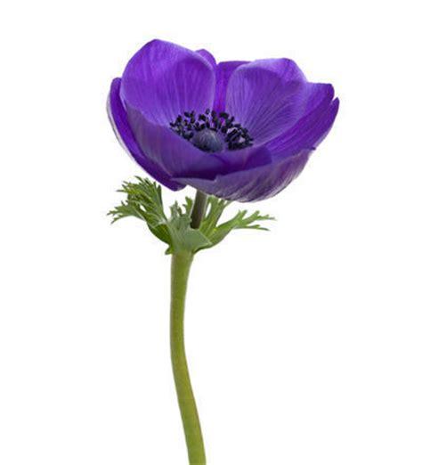 meuble de cuisine ikea quelles fleurs offrir à la valentin que signifient