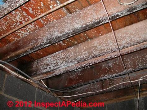 mold contaminated floor framing  subfloor