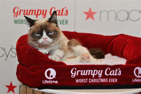 Photos Grumpy Cat Helps Unveil Holiday Windows At Sf