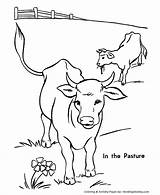 Cow Coloring Cows Printable Farm Cattle Animal Sheet Drawing Sheets Herd Pasture Colouring Colour Honkingdonkey Steer Popular Different sketch template
