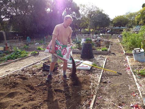 socal fallwinter veggie soil tips  delicious returns