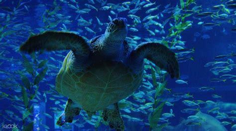 sea aquarium tickets sea aquarium admission ticket klook