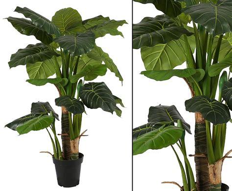 pflanze große blätter pflanzen im glas kaufen wie kann pflanzgef e innen bepflanzen 20 ideen f r arrangements