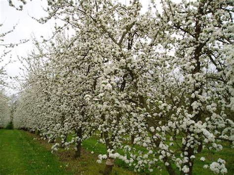 chambre d agriculture cotes d armor cidre vers une ée positive pour les pommiers