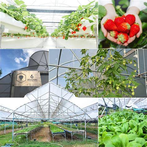 นวัตกรรมการเกษตรยุคใหม่ กับการปลูกพืชเมืองหนาวในเขตร้อน