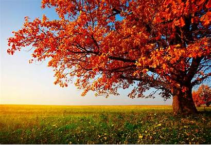 Autumn Tree Desktop Wide