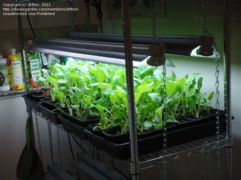 Vegetable Gardening Winter Indoor Salad Garden, 1 By Drthor