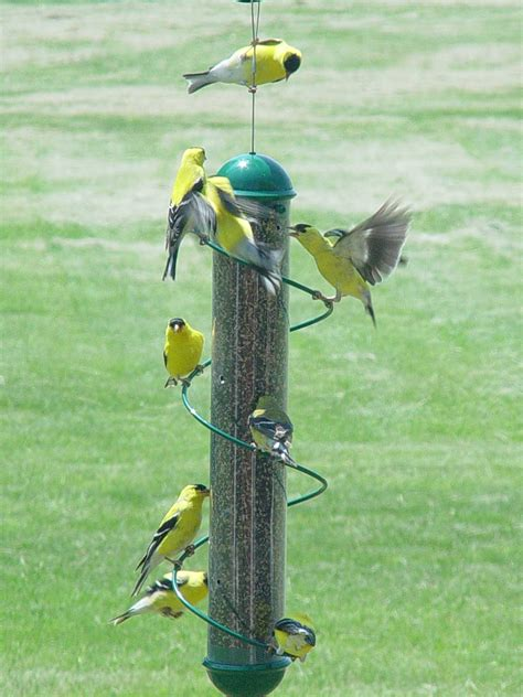 finch bird feeder bird feeders for yellow finches birdcage design ideas