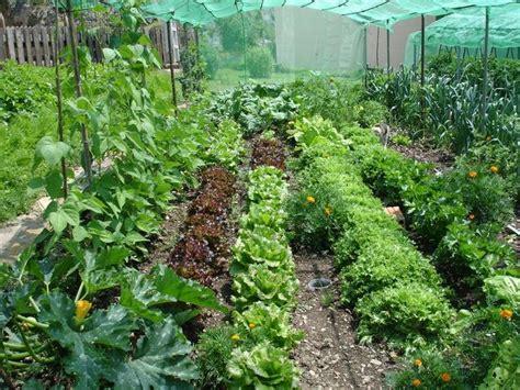 the hort hort ecologic negro con flow