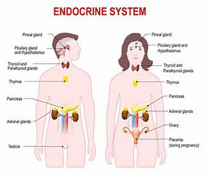 Who Are Endocrinologists And What Do They Treat