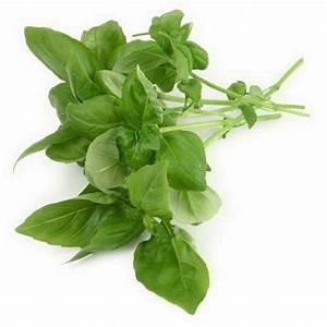 My favourite herb: Tulsi   Illuminated Health