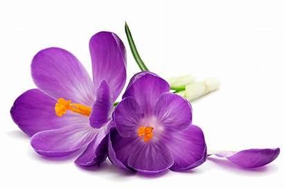 Purpleflowers Center Birth Teens
