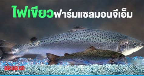 แคนาดาไฟเขียวฟาร์มปลาแซลมอนจีเอ็ม