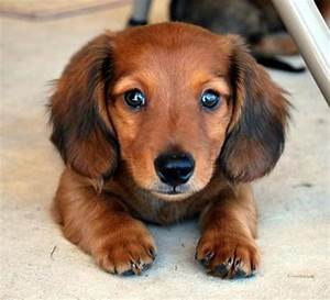 Short Haired Dog Breeds Small Breed Care Cute With Picture