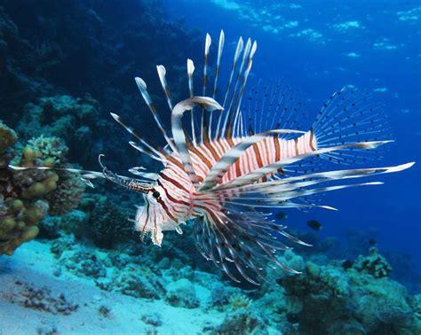 invasive fish species   world mnn