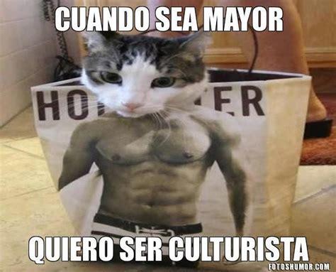 resultado de imagen para gatos graciosos gatitos