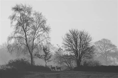 Heute Ist Alles Schwarzweiß (forum Für Naturfotografen