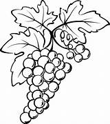 Grapes Coloring Pages Grape Drawing Wine Leaves Fruit Spain Vine Painting Fresh Colouring Leaf Colorluna Bottle Carving Wood Patterns Luna sketch template