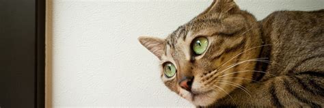 Cat Funny Photos Hd Desktop Wallpapers 4k Hd