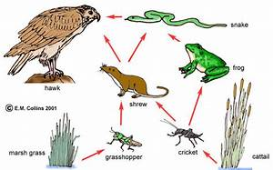 Kaylie and Averys food web - ThingLink