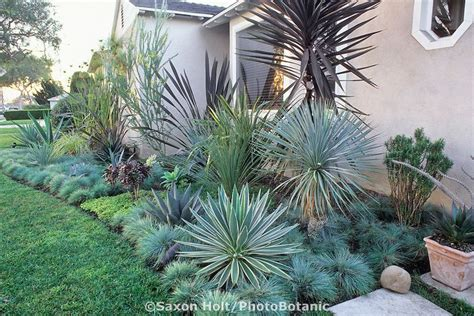 southern california succulents southern california front yard garden with succulents xeriscape pinterest gardens front